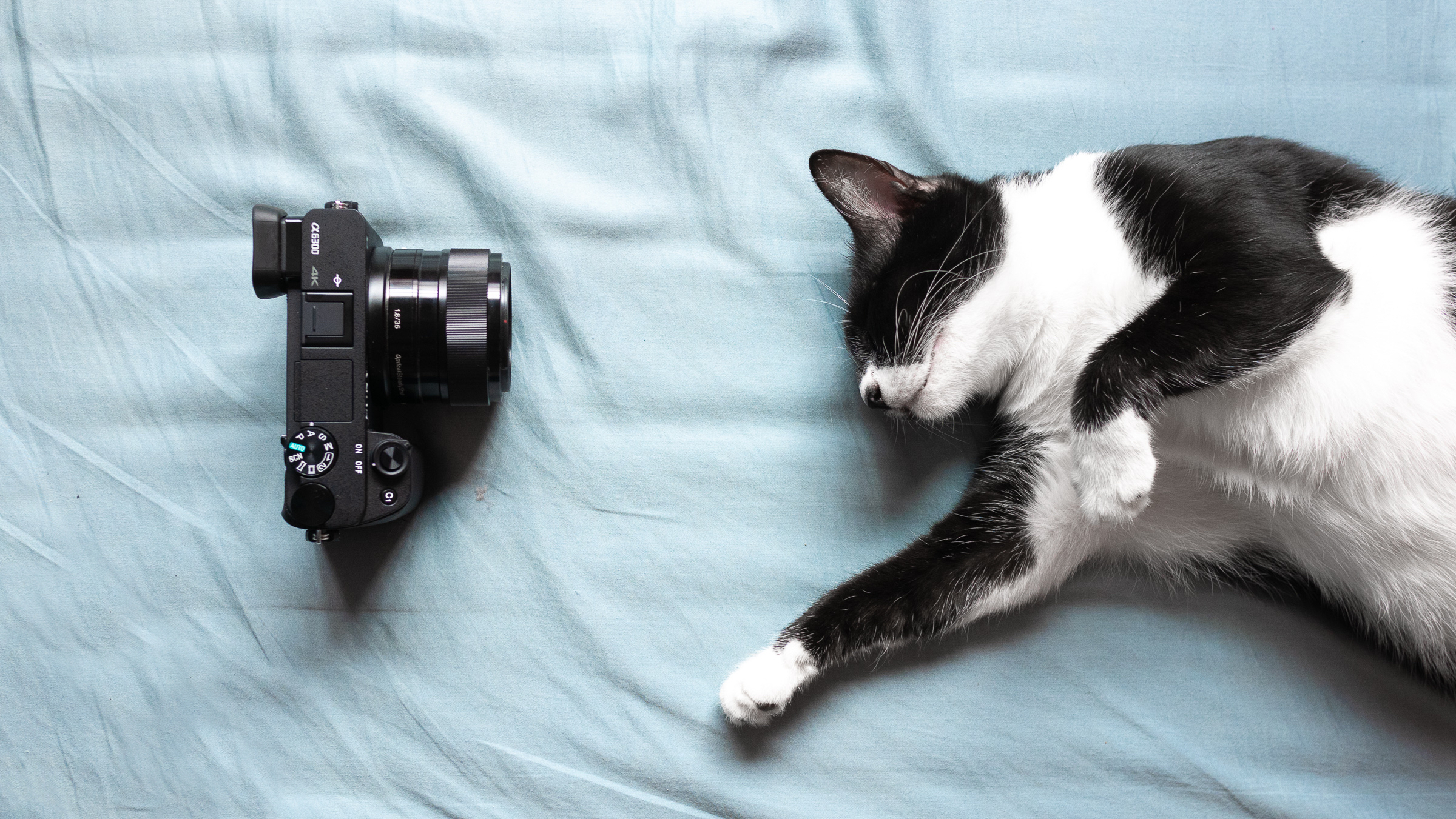 Cat sleeping on a blue bed sheet with camera in front of her